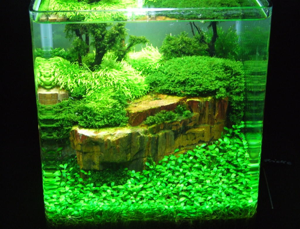 aquarium neu einrichten aber richtig krebse im aquarium aquarium knowhow cambarellus. Black Bedroom Furniture Sets. Home Design Ideas